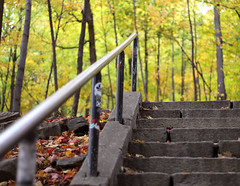Autumn 2012 in Montreal (Tina Mailhot-Roberge) Tags: city trees nature field leaves stone stairs climb montreal montroyal