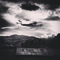 กลางป่าดอย #คนไทยเรียก #ภูเขา #ดง #ป่าลึก #ดงดิบ #forest #cloud #tree #chiangrai #thailand