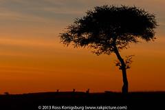 Masai Mara Sunset.jpg (Ross Konigsburg) Tags: landscape kenya masaimara africalandscape africa2013