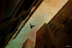 Lines (Rinogmb) Tags: barcelona texture lines spain europa europe pigeon paloma catalonia catalunya piccione barcellona spagna catalogna colom linee ringexcellence