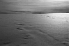 DunkelSchnee (MrSleepyhead) Tags: italien schnee blackandwhite sun snow ski mountains alps texture nature glitter analog dark landscape natur berge di 100 alpen alpe sdtirol altoadige redfilter darksky gebirge glistening dolomiten bwfilm nikonf5 id11 kastelruth seiseralm castelrotto adox ilfotec nikon50mmafd14 silvermax siusi