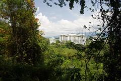 _DSC9780w (Adrian Royle) Tags: city travel holiday nature forest nikon asia mangrove malaysia borneo kotakinabalu sabah kotakinabaluwetlands