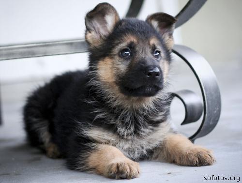 Filhotes de cachorros 22