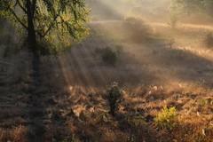 "IMG_5521 (""Jimmer"" ( http://jim-vance.artistwebsites.com/ )) Tags: nature sunrise landscape sunrays"