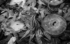 20131001 (zzkt) Tags: blackandwhite film monochrome 1960s hr greyscale newsreel motovun f20 iso160 filmisdead leicasummiluxm35mmf14asph leicam9 ¹⁄₃₅₀sec ¹⁄₃₅₀secatf20 filmskenovosti foam:f15=2