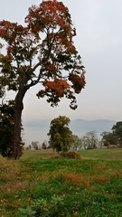 P1080778 (A Million Shards of Light) Tags: autumn dogs halloween fog river foliage hudson rockefeller rockwood