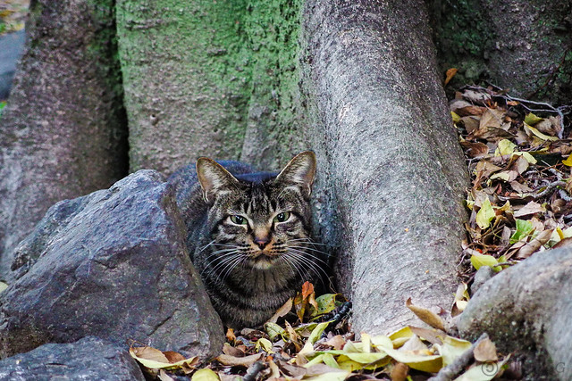 Today's Cat@2013-11-19