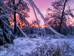 SamuelWilmot-icestorm-sunset (Photo Girl Canada) Tags: winter sunset snow canada ice nature wilmot clarington icestorm2013