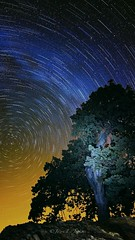 Time Passes By the Wise Old Oak (j-dub1980(THANK YOU FOR 100k+ Views)) Tags: california nightphotography trees summer northerncalifornia stars lights oak andromeda liveoak sanfranciscobay nightsky startrails lightpollution polaris pachecopass lightstreams milkyway starlight santaclaracounty andromedagalaxy dinosaurpoint adobecreativesuite lightdomes astrometrydotnet:status=solved losbanoscalifornia winterconstellations adobelightroom3 starcircleacademy californiahighway152 nightskyimages summer2013 adobephotoshopcc vision:sky=0865 vision:mountain=0722 vision:outdoor=0944 vision:plant=0603 astrometrydotnet:id=nova229277