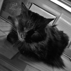 I'm not snoring, just purring loudly! (rightthewrong) Tags: new sleeping white black mountains weather cat washington office kitten mt desk sleep room maine kitty peak nh hampshire presidential mount sleepy observatory coon summit february asleep feb marty range obs 2014 mwo presidentials