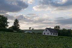 Frankrijk Champagne, Champagnedorp Congy. Avondhemel met huis, heuvels, en champagnewijngaard in the voorgrond (petervandelavoir) Tags: france clouds champagne wolken frankrijk congy champagnedorp champagnevillage
