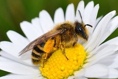 DSC_0729 (sylvette.T) Tags: macro insecte 2014 extendertube bagueallonge nikond5100 objectifnikon50mm14g infinitexposure