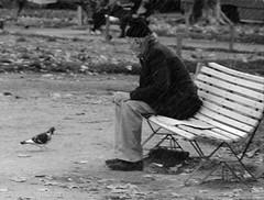 En la plaza (ojoadicto) Tags: blackandwhite blancoynegro banco viejo oldman paloma plaza bench