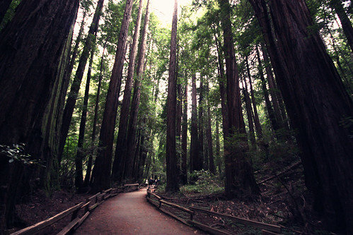 Redwood National Park, San Francisco. Explore!