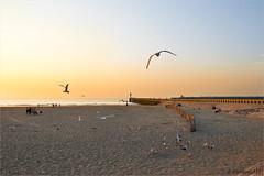 Calais Plage (JL) Tags: sunset mer soleil coucher sable soir plage phare calais jete
