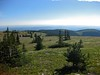 Moose Mountain Hike - 11 Brokeback Meadows with approach trail (benlarhome) Tags: mountain canada mountains nature montagne trekking trek kananaskis rockies hiking hike trail alberta rockymountain hiker gebirge brokeback moosemountain
