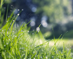69 ~ early one Sunday morning (- e l i -) Tags: morning grass early woods bokeh sunny dew elirees