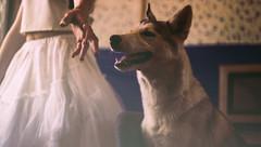 51/365 (robertcrispe) Tags: dog house robert film girl fur husky pretty hand dress teeth elle abandon 365 graham 365project crispe