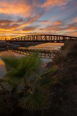 Fan Palm Blaze (boingyman.) Tags: bridge sunset reflection landscape fan canal palm palmtree sacramento scape natomas boingyman
