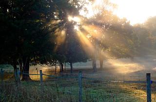 Rays Seek Fence