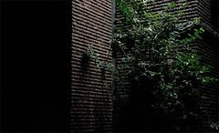 Nachtecke (IamBen.) Tags: night nacht cologne kln busch