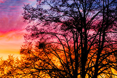 2nd December Sunset (David Doua) Tags: pink blue autumn sunset red sky orange sun colour tree window silhouette yellow night fire evening europe december republic colours czech prague explosion violet lime magneta