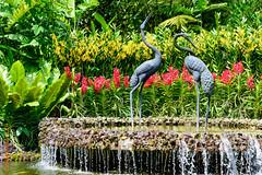Singapore (Edi Bhler) Tags: plant flower nature fountain springbrunnen natur pflanze skulptur blumen structure waters bauwerk gewsser 28300mmf3556 nikond800 brunnenanlage