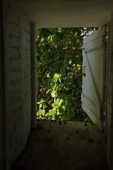 A window to a tree (Ale Berger) Tags: trip vacation lighthouse tree green window garden keys nikon december florida keywest southflorida