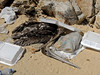 Cabo Beach Trash (cowyeow) Tags: bird beach birds trash dead mexico death garbage sand sad decay pelican resort crap pollution ugly bajacalifornia environment bajasur filth styrofoam smelly cabosanlucas