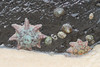 Sea creatures 001 (DMT@YLOR) Tags: fingalheads