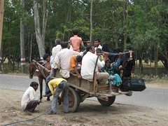 Mughal_bullock_cart