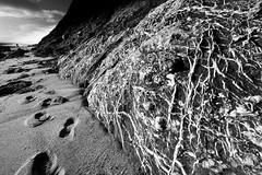Cliff Base (Fiskur Graphic Design Studio) Tags: uk shadow beach debris footprints devon coastline geology gypsum sculptural stormdamage branscombe siltstone mudstone outdoorphotography westoncombe jurassiccoastline isolatedfigure satinspargypsum cretaceousrockformations crowblackvalley