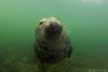 Seal in the Eastern Scheldt!