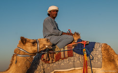 Deserts and Camels 131107 17_01_10_01 (Renzo Ottaviano) Tags: race al dubai desert united racing course emirates camel arab lorenzo races camels corrida emirate deserts uniti renzo unis arabi carrera corsa emirati unidos camellos chameaux rabes kamelrennen   arabes ottaviano camelos emiratos emirados vereinigte arabische cammelli emiratiarabiuniti mirats     marmoun