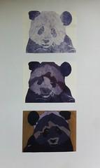 Print Making (ameliaw750) Tags: stencil panda negativespace printmaking