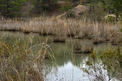 Edge of containment pond (holdit.) Tags: brookwoodal rockin rockcollecting alluviaal coal iron sand clay forest gas