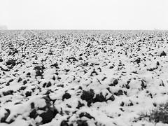 (Christian Güttner) Tags: fomapan film fomapan400 deutschland tyskland schwarzweis schwarzweisfotografie sw svartvitt schnee snow feld monochrome mittelformat moerschecodeveloper zenzabronica herzogenrath niemcy natur nrw nature natura niebo czarnobiale camera kamera landschaft landscapes landscape krajobraz europa etrs ecodeveloper euregio 645 6x45 120 analog analogue rollfilm umwelt outdoor germany heaven himmel horizont blackandwhite bw bokeh bokhe mediumformat m
