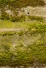 (Oscar F. Hevia) Tags: textura musgo verde texture moss green asturias asturies españa lastres paraísonatural principadodeasturias spain