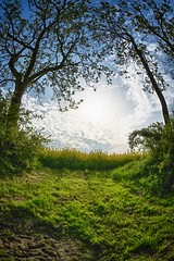 Spring (dubdream) Tags: morning sky cloud sun tree field landscape spring nikon fisheye hdr rapeseed colorimage sigma10mm d7100 dubdream