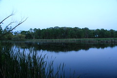 Lincoln Marsh Lagoon Panorama (danxoneil) Tags: nature marsh wheaton lincolnmarsh wheatonparkdistrict
