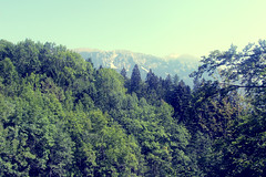 Bled - Slovenia (londoniall) Tags: summer lake holiday mountains green relax friend bled 2012