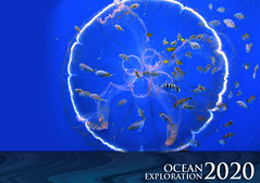 Ocean Exploration 2020: Jelly