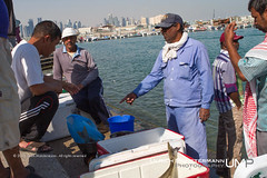 Fish Market at Doha Corniche, Qatar (Ulrich Mnstermann) Tags: city fish animal fauna tiere fisherman wildlife location corniche fishmarket dieren doha qatar buildingslandmarks arabianpeninsula addawhah  addawa dohamunicipality stateofqatardawlatqaar