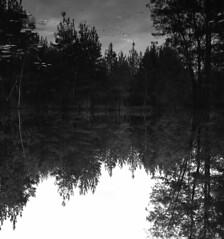 (Ryasa31) Tags: film rollei analog rolleiflex forest t retro 80
