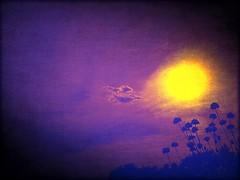 Flores al Sol de La Noche...!!!