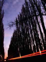 diagonales (AgustínCarrillo) Tags: trees patagonia arboles agustin carrillo chubut trelew agricolas diagonales chacras productores