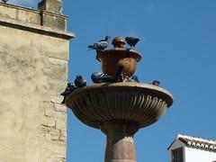 Antequera, Andalousie, place St Sbastien, bain de pigeon dans la fontaine (Jeanne Menj) Tags: pigeons andalucia sansebastian fontaine antequera andalousie stsbastien