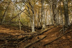 . (*jos*) Tags: wood autumn italy forest landscape vallidilanzo valadedlans valletesso