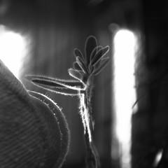 destellos diurnos (Felipe Crdenas-Tmara) Tags: del la y para centro el estudio vida principio formacin humanista hasselblad503cx experiencial splanar156f120mm ultrafineextreme400 colegiolaalborada centiritgocom