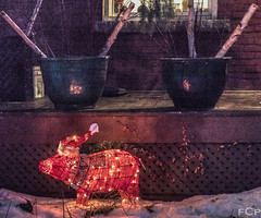 Christmas Pig (fredder77) Tags: santa christmas city winter urban snow toronto lights pig holidays decoration lawn